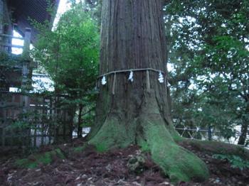 RIMG2352須佐の大杉.jpg
